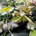 Модул захарни цветя