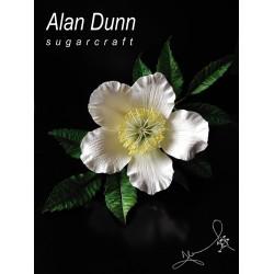 Майсторски клас с Alan Dunn - 08 Октомври 2019