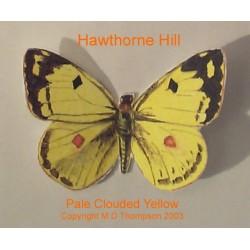 Пеперуда - Pale Clouded Yellow