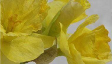 Силиконови отпечатъци за направа на цветя